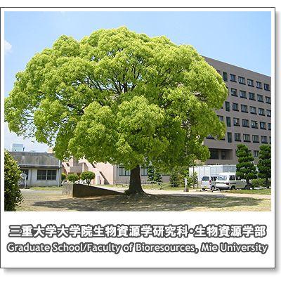 campus2008_7.jpg
